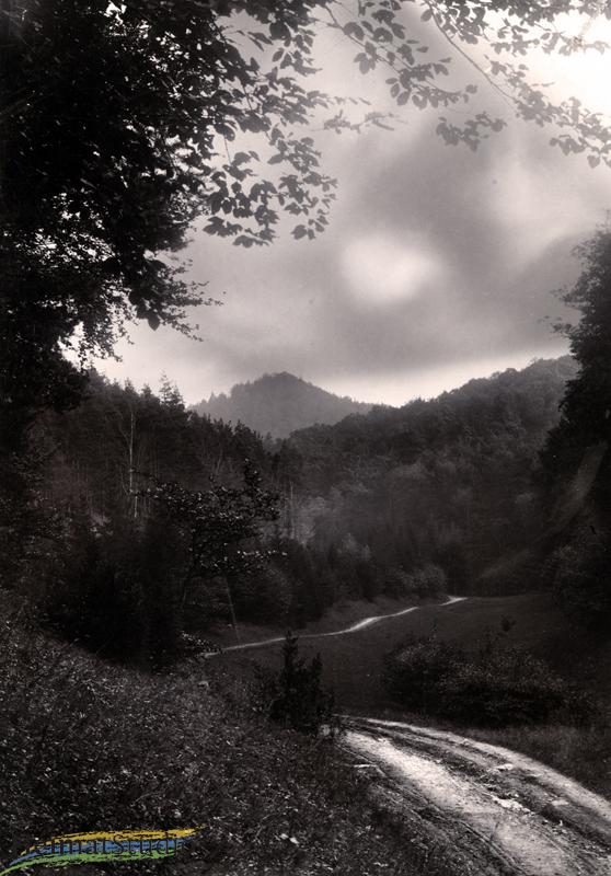 Keudelstein - Waldweg zum Gutshof